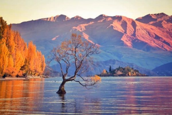 When's The Best Time of Year to Visit New Zealand